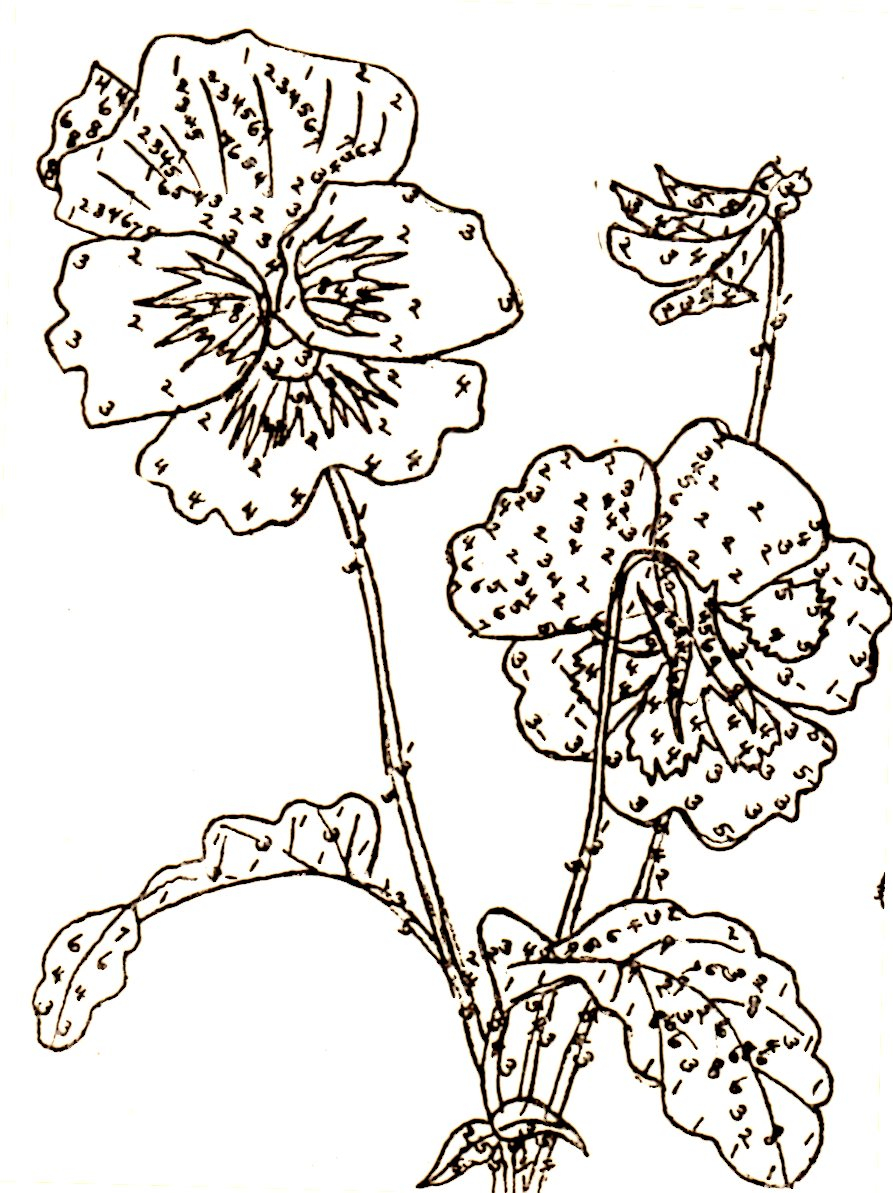 Rose Patterns For Embroidery Belding Silks Embroidery Patterns Wild Rose Violet Pansy And Sweet