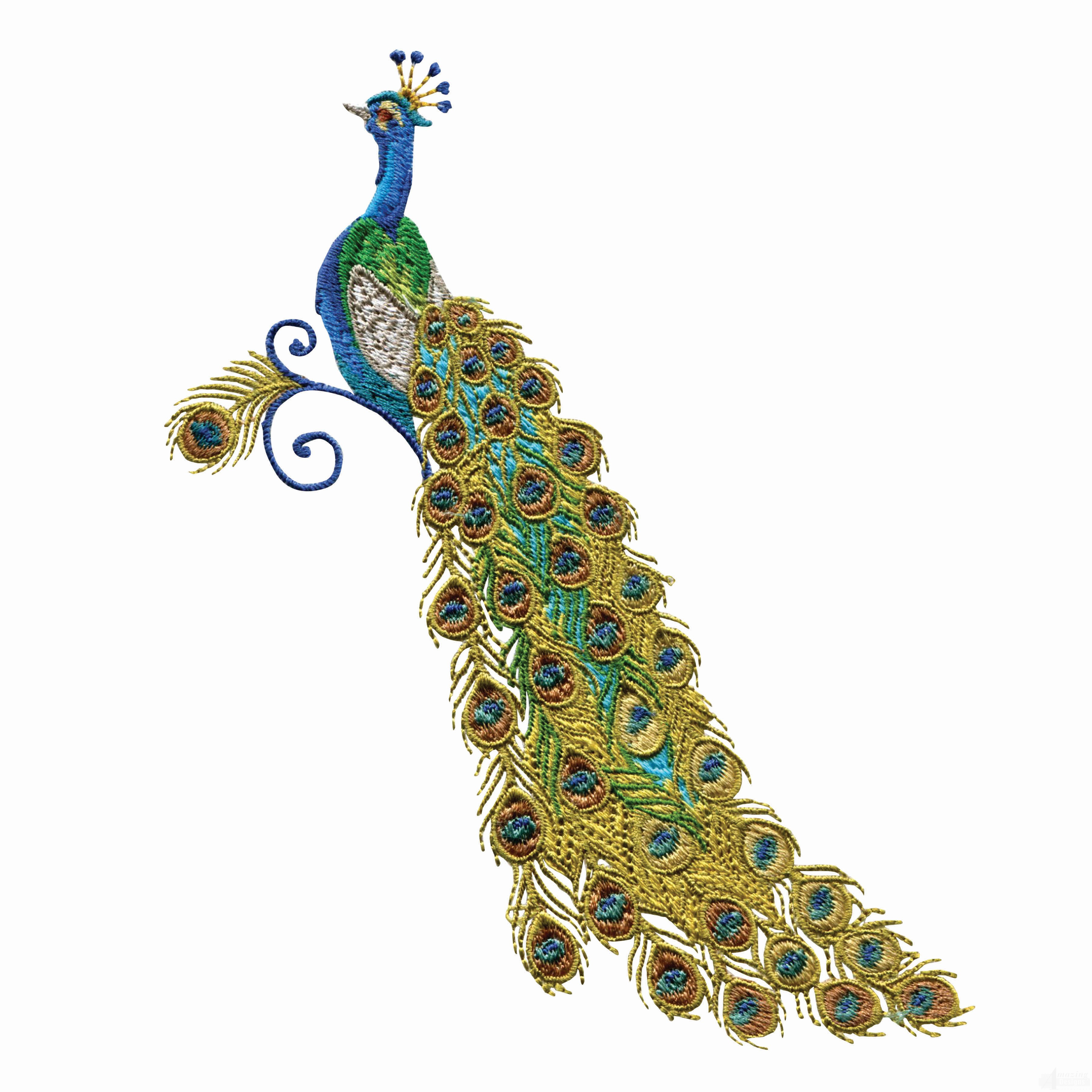Peacock Embroidery Patterns 15 Best Photos Of Peacock Embroidery Patterns Peacock Embroidery