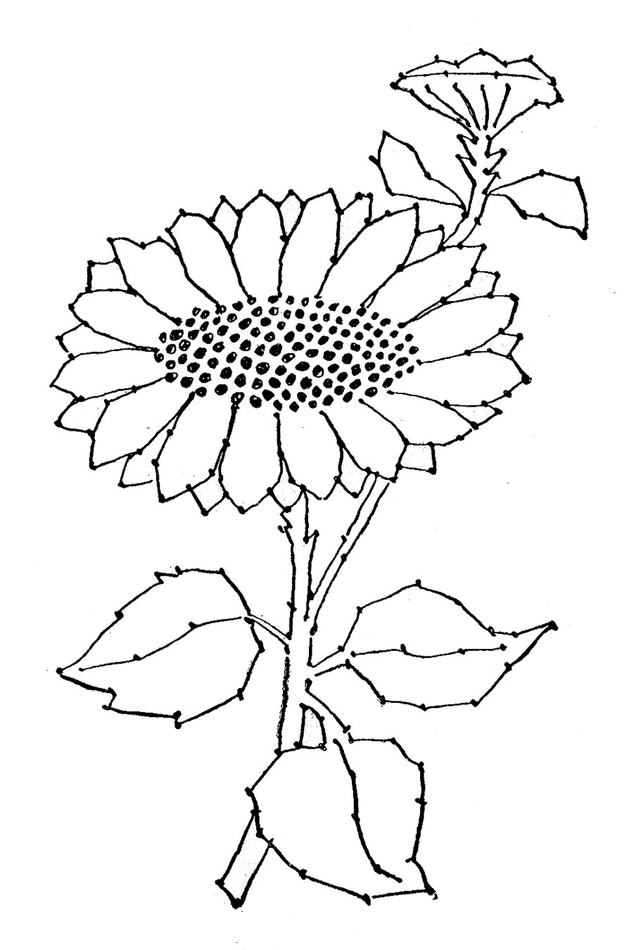 Sunflower Embroidery Pattern 8 Sunflower Images Beautiful The Graphics Fairy